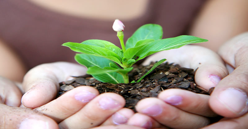 Moving a sprouting plant in soil